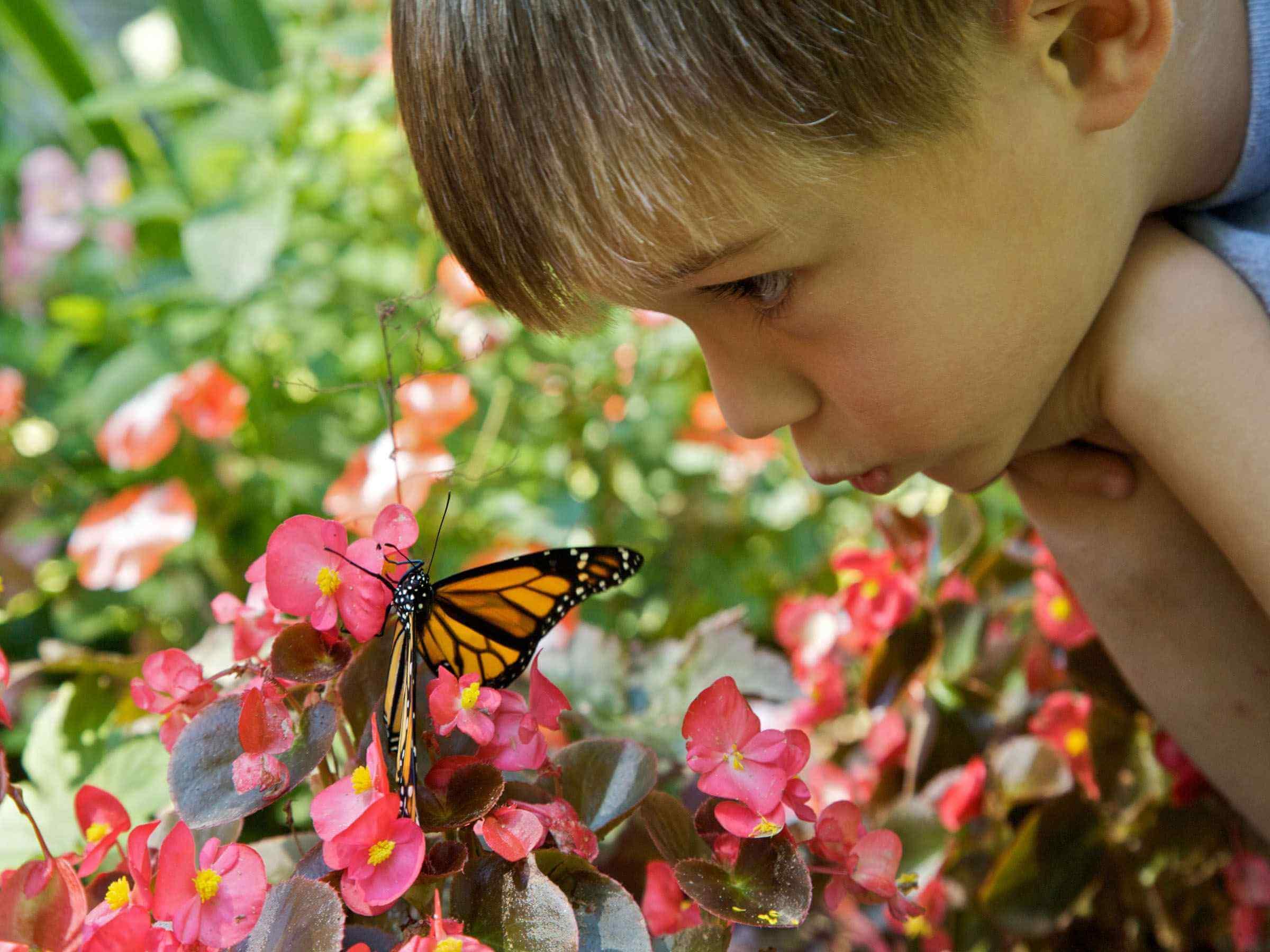 حديقة الفراشات في اسطنبول