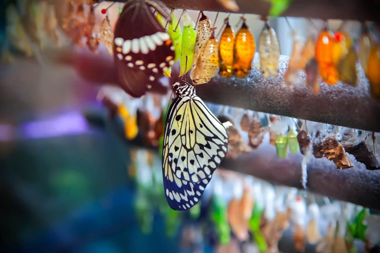 مزرعة الفراشات في اسطنبول